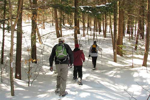 Snowshoeing at Gifford Woods State Park
