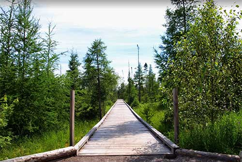 Boardwalk through the Lake Carmi Spruce-Tamarack Bog (photo credit: Matt Parsons)