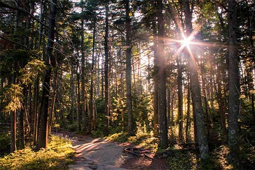 The forest at Mt. Ascutney State Park