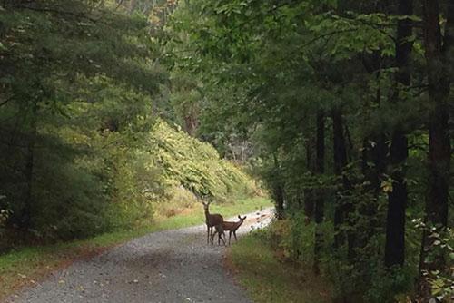 Taconic Mountains Ramble is a great park for spotting wildlife