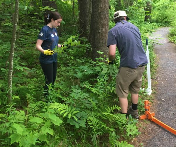 STaff removing invasive species at Lake Shaftsbury