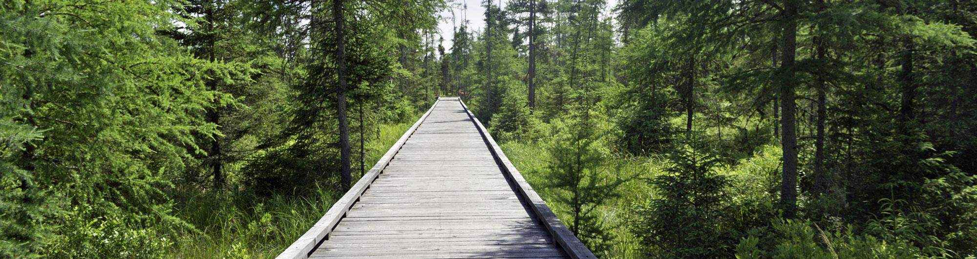 Lake Elmore Vt >> Vermont State Parks - Lake Carmi